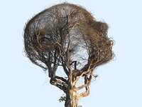 3D model tree head hd