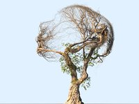3D tree head hd model