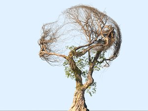 3D tree head hd model