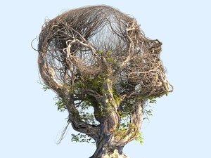 3D tree head hd
