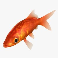 3D goldfish animation model