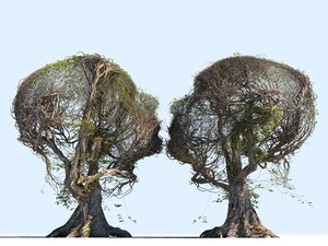 tree head hd 3D model