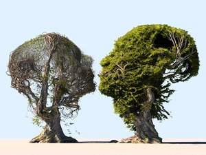 3D model tree head scan