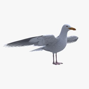 3D seagull feathers modelled model
