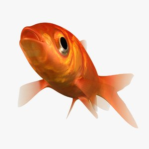 goldfish rigged 3D model