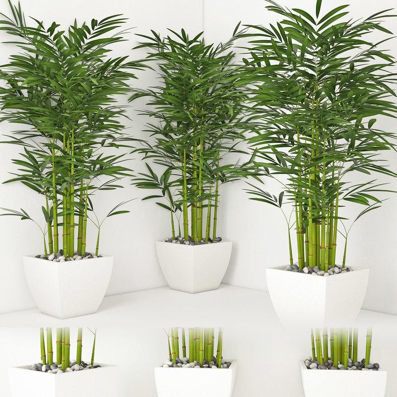 3D houseplant 19