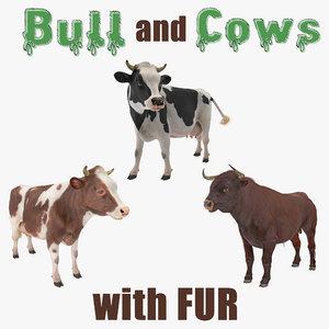 bull cows fur holstein 3D model