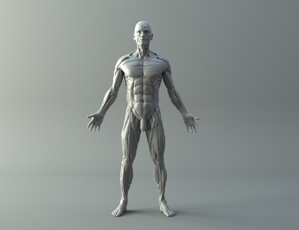 ecorche printing character modelling 3D