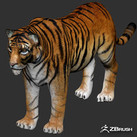 tiger games animations 3D model