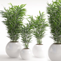 3D houseplant 20 model