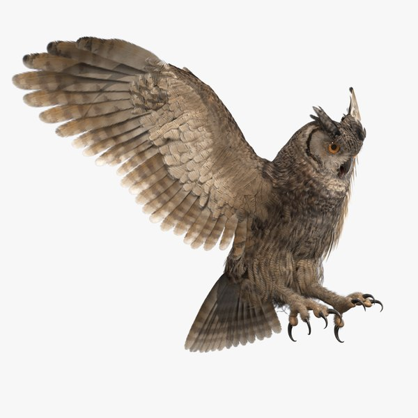 3D owl rigged
