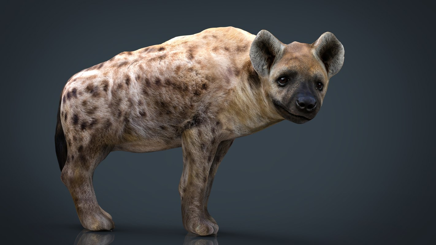 hyena animal mammal model