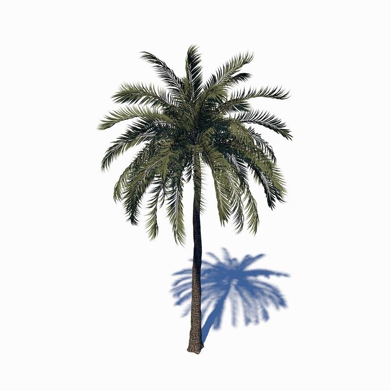 beach palm tree 3D
