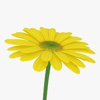 yellow daisy 3D model