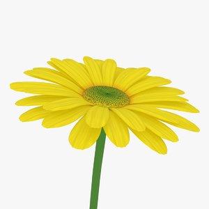 yellow daisy 3D model