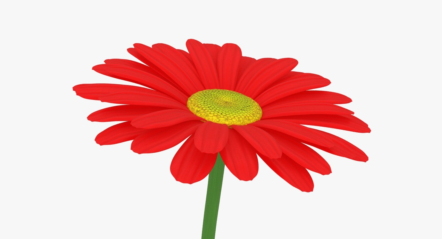 3D red daisy