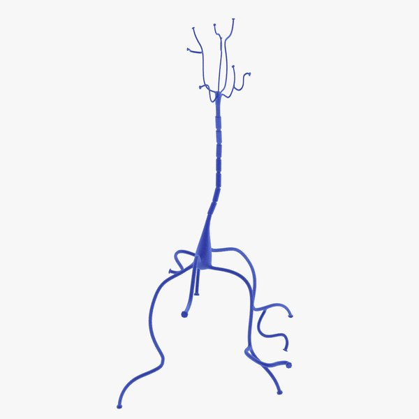 3D neuron cell model