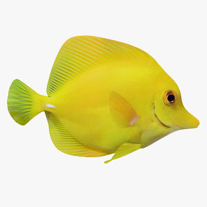 yellow tang fish animation 3D model