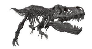 3D tyrannosaurus rex skeleton