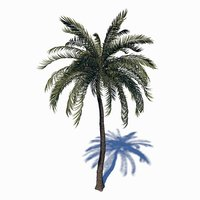 beach palm tree 3D model
