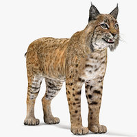 3D bobcat modelled model