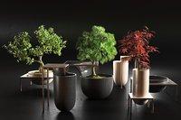 bonsai trees pots 3D model