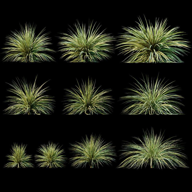 3D yucca plant exterior model