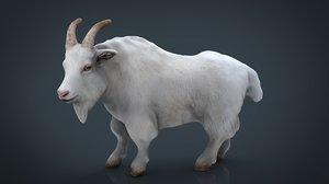 white goat 3D model