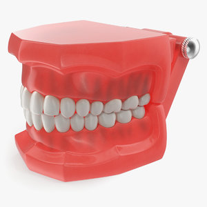 3D typodont teeth modeled model