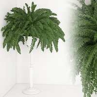 houseplant 21 3D