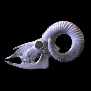 3D model goat skull print modelled