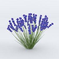 Lavender Plant 01