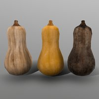 3D butternut squash