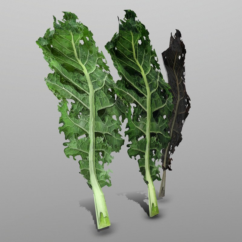 3D model kale ready games