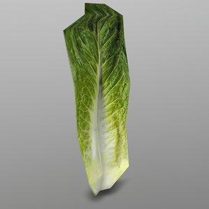 roma lettuce 3D