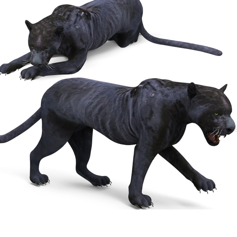 3D panther rigged animation model