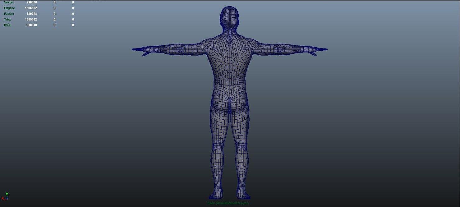 body arteries veins nerves model