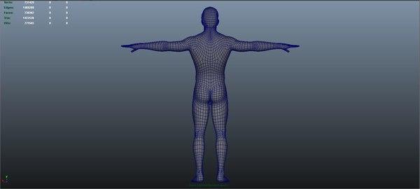 3D body arteries veins nerves model