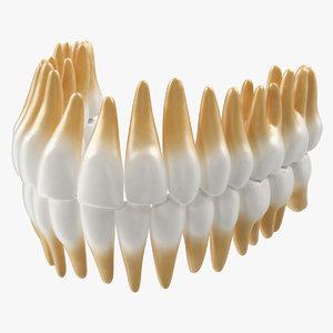 3D teeths medical modeled model