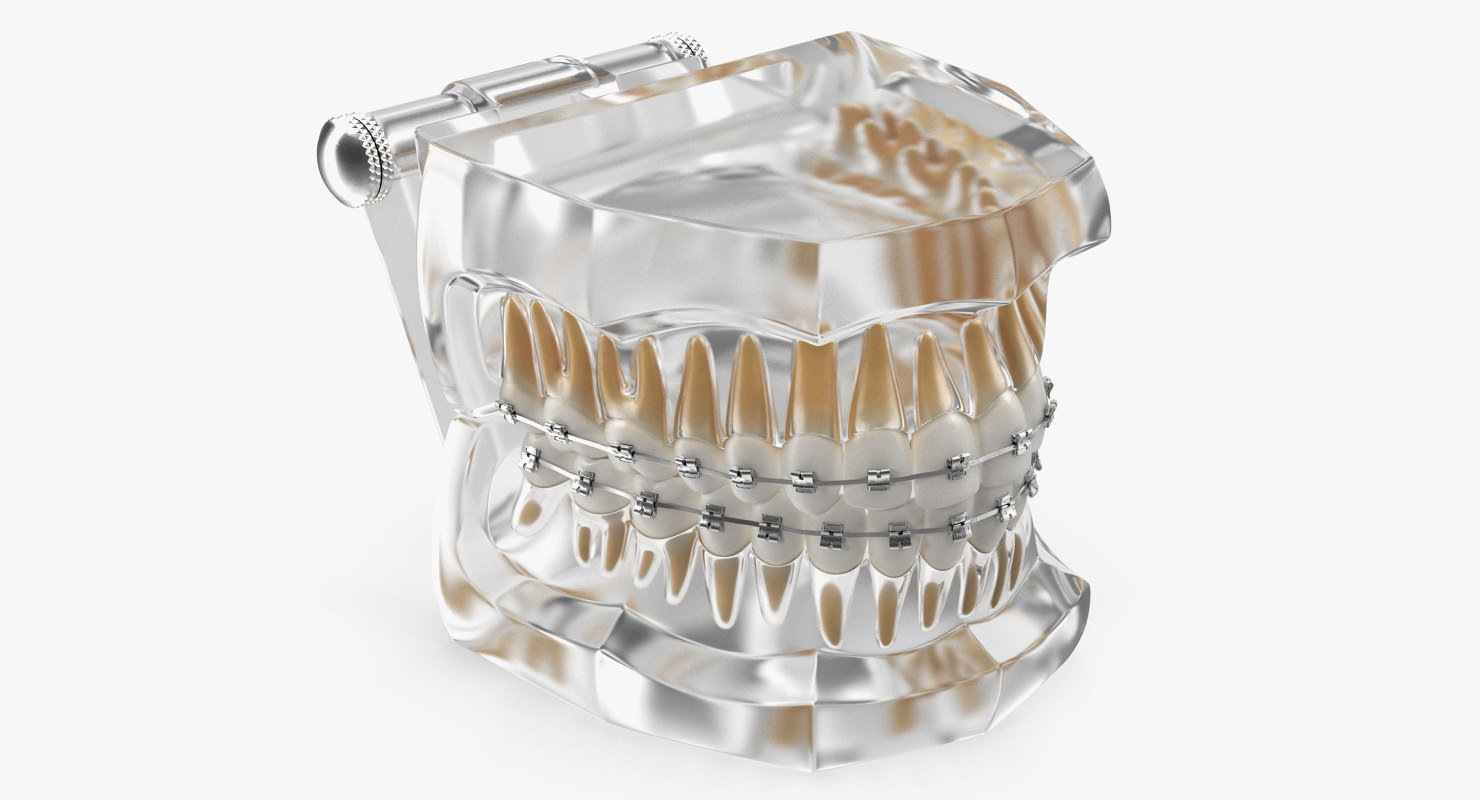 transparent dental typodont teeth 3D model