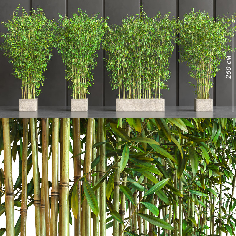 potted decor bamboo 3D model