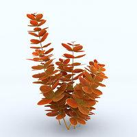 Berberys Orange