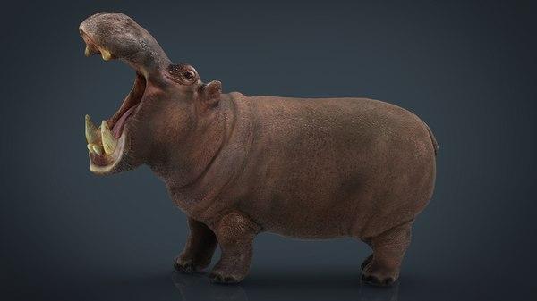 african hippopotamus 3D model