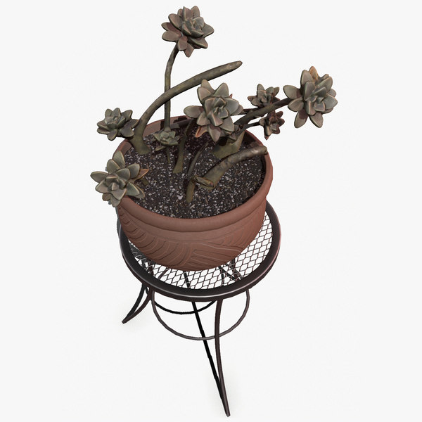 real-time succulent plant model