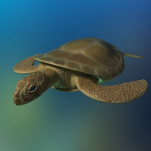 brown sea turtle fully rigged 3D model