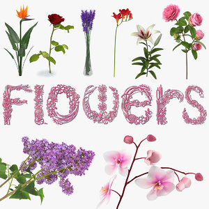 3D flowers 6 model