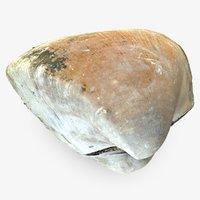 3D model sea shell