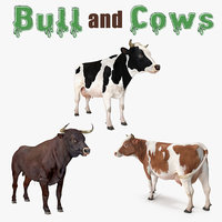 Bull and Cows Collection