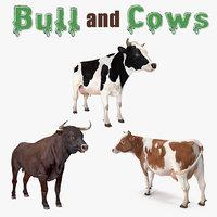 bull cows model