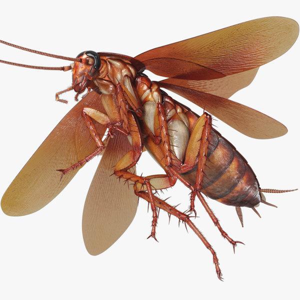 3D cockroach american animation
